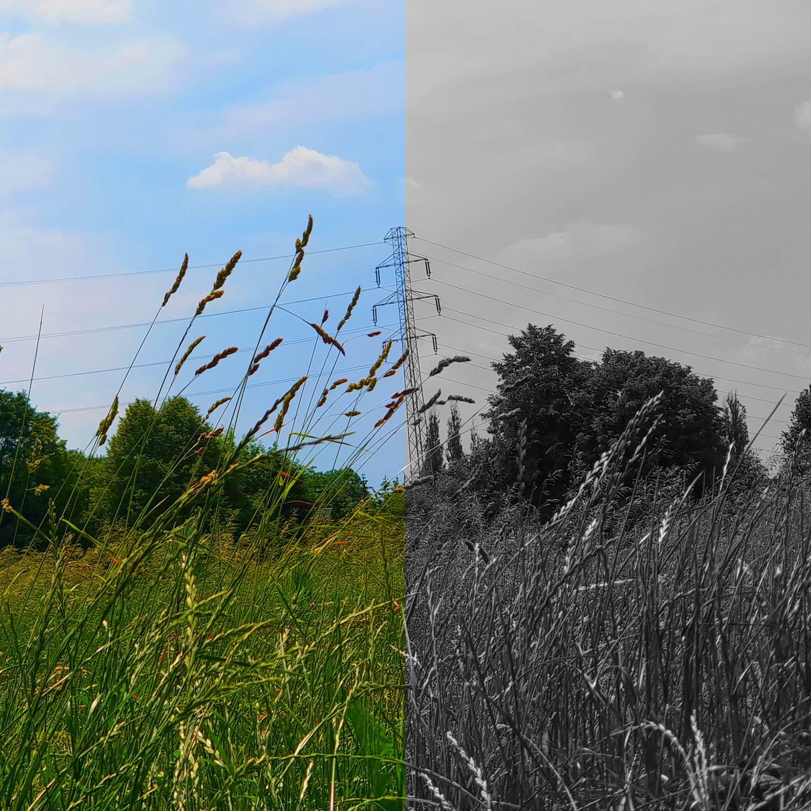 pole, trawa, niebo, pół czarnobiałe
