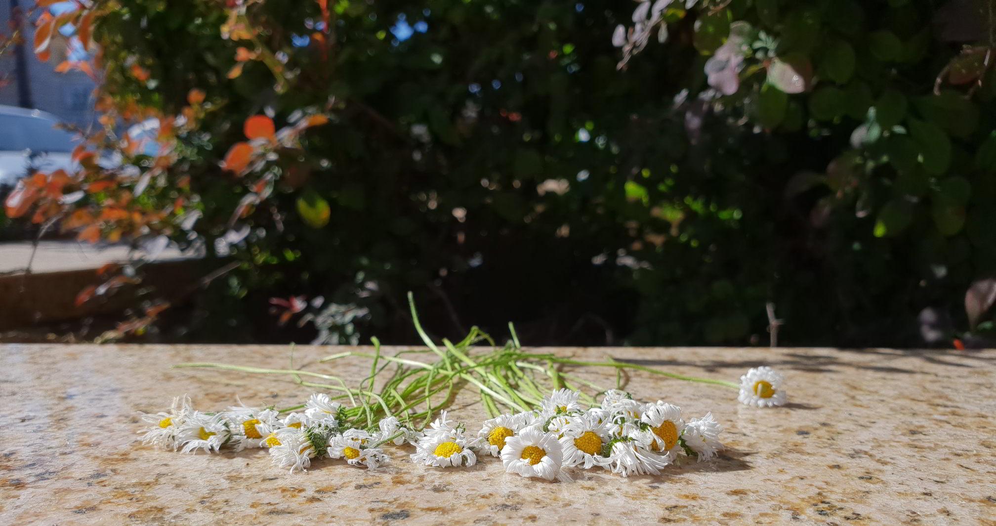 zerwane kwiaty
