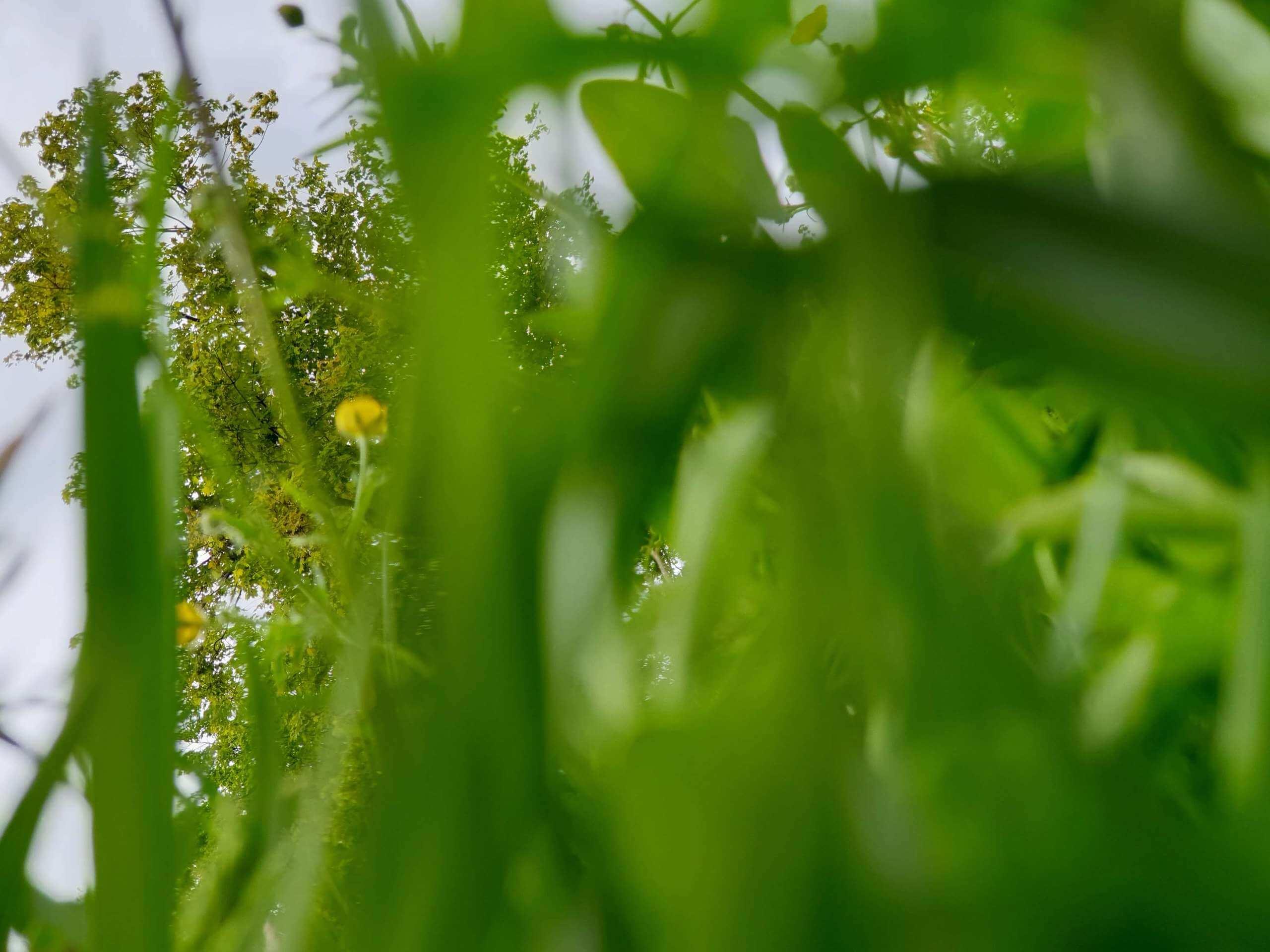 widok spod trawy